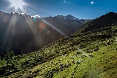 Aus den Schweizer Alpen