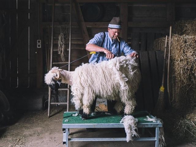 Wolltradition bei ORTOVOX