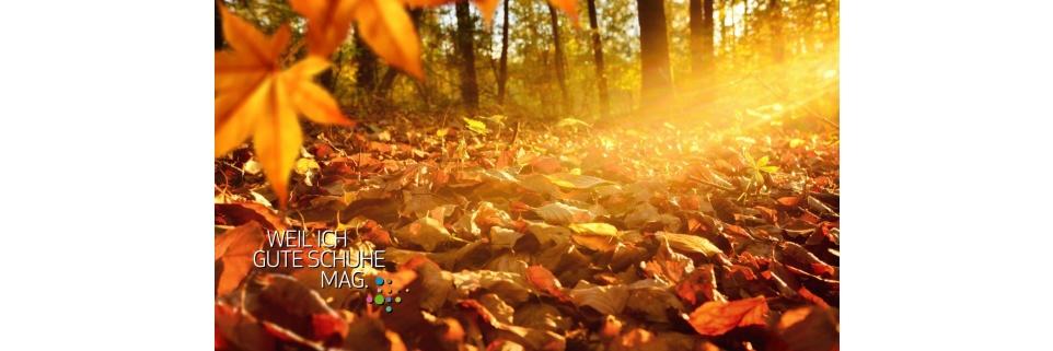 Herbst (Banner, 16:9)