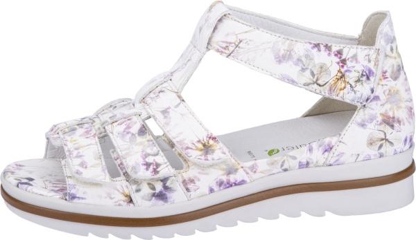 WaldläuferHakura, weiß flower Weite H